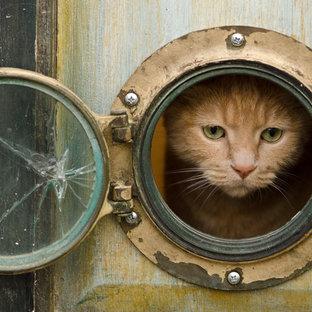 Gobi peers out his cat portal