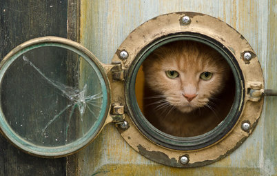 Pets: 12 Ways to Help Your Cat Safely Enjoy Your Garden