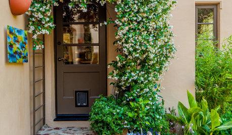 How & Where to Grow Beautiful Vines