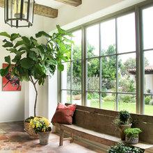 10 Top Plants to Grow Indoors