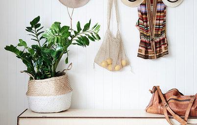 Pregunta al experto: ¿Cómo debo regar las plantas de interior?