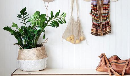 zimmerpflanzen ideen tipps. Black Bedroom Furniture Sets. Home Design Ideas
