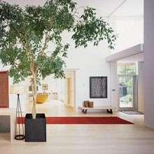 How to Grow a Happy Ficus