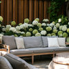 Garden Tour: A London Courtyard Blooms With Year-round Colour