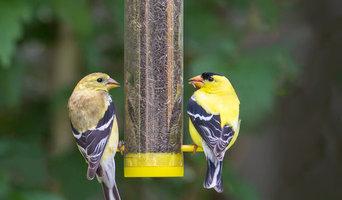 Backyard Songbird Collection