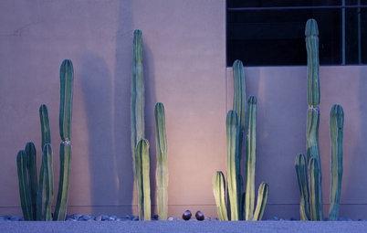 Tutto Quello che Dovete Sapere per Acquistare e Coltivare le Succulente