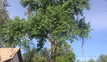 Cottonwood Prune Before and After