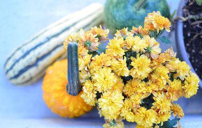 Ein schöner Garten im Herbst – mit diesen 11 Ideen gelingt er!