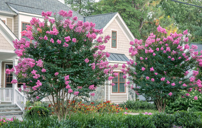 10 Flowering Trees Landscape Architects and Designers Love