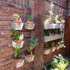 11 astuces pour cultiver sur les murs d