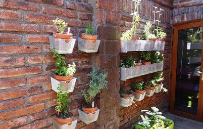 11 astuces pour cultiver sur les murs d'un balcon ou d'une terrasse