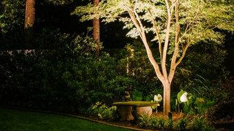 Indianapolis Landscape Lighting - Tree Lighting