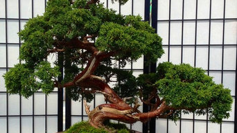 Japan Bonsai