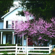 Traditional Exterior by SavATree