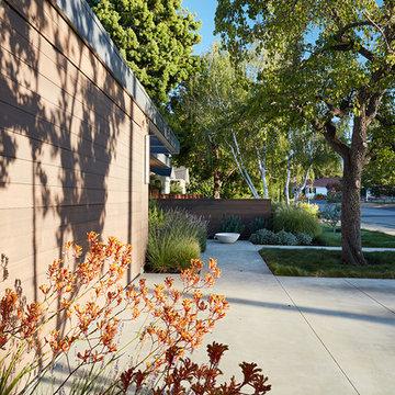 Los Altos New Residence