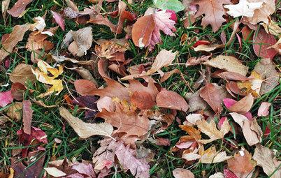 落ち葉を庭づくりの材料として活用しよう