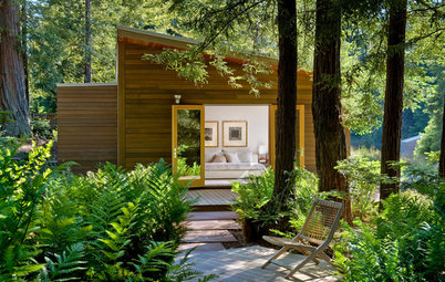 What to Plant Under Native Redwood Trees