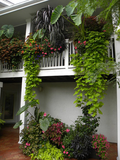 Tropical Exterior by Smalls Landscaping