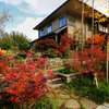 Houzz Tour: An Urban Home Nestled in a Thicket