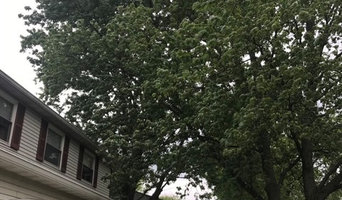 Tree Removal and Tree Trimming in Dayton