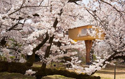 Lernen von Hanami: Wir schwelgen in der Schönheit der Obstblüte!