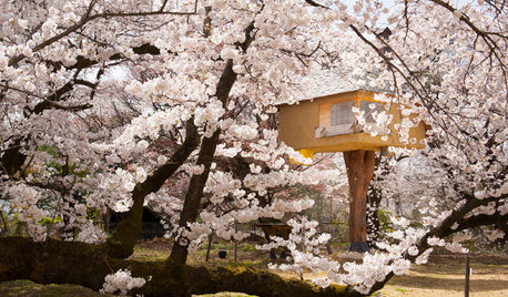 Picture Perfect: 29 Reasons to Love Cherry Blossom Season