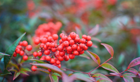 New Year, New Landscape — What to Do in Your January Garden