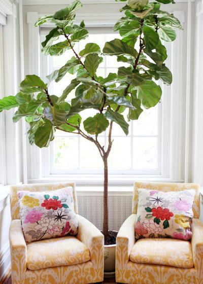 Inspiration: grønne planter i hjemmet er uundgåeligt for tiden