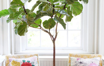7 Favorite Houseplants That Love an East-Facing Window