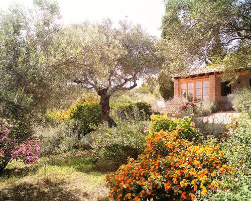 imagen de jardn mediterrneo de tamao medio en patio delantero con huerto y
