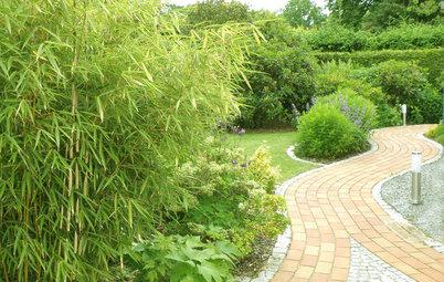 Bambus: Gras, das in den Himmel wächst
