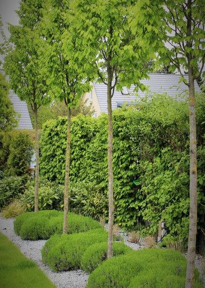 Kleine Riesen 7 Bäume Für Den Minigarten