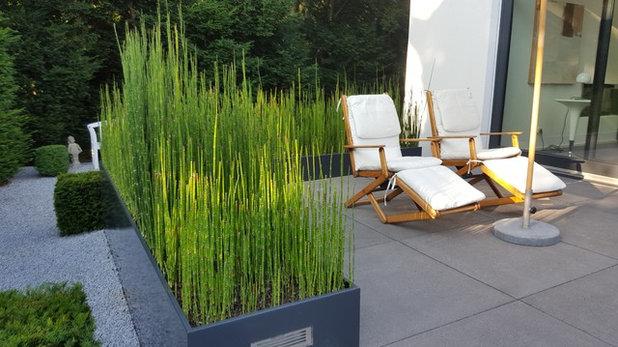 Sichtschutz aus Pflanzen: Diese 14 Gewächse eignen sich als grüne Wand