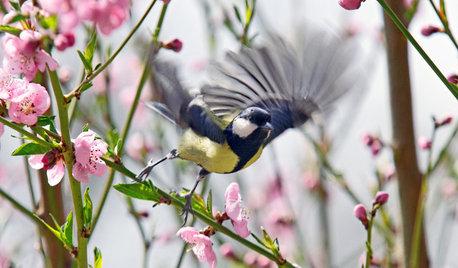 Gefährliche Glasfronten: So verhindern Sie Vogelschlag