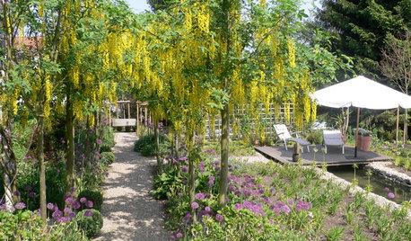 Die 5 Pflanzen-Highlights im Mai