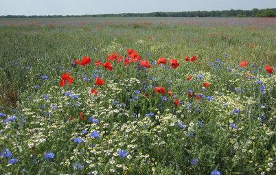 Inspiration Wildblumenwiese – holen Sie den bunten Sommer nach drinnen!