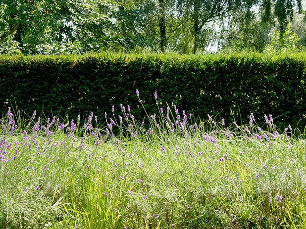 Gartenbesuch ein langer schmaler garten in krefeld for Gartengestaltung langer garten