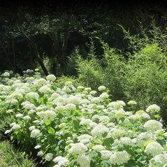 Feldmann Gartenbau feldmann garten landschaft pfungstadt de 64319
