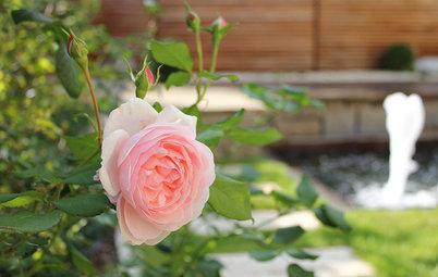 Der Garten im Juni – was jetzt zu tun ist