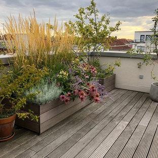 Ispirazione per un vialetto esposto in pieno sole sul tetto in autunno con un giardino in vaso