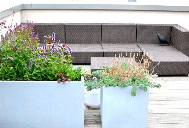 Modern Garten by Nelka & Blattraum  Begrünung Innen&Aussen