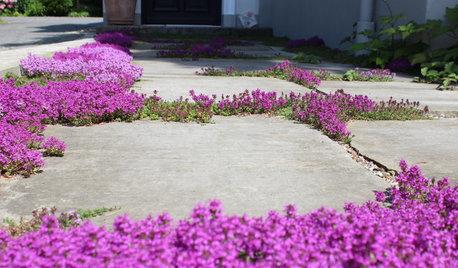 Schöne Lückenfüller: Lebendige Fugenpflanzen für den Garten