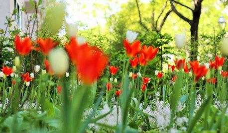 Die 12 schönsten Frühjahrsblüher – hurra, es wird wieder bunt!