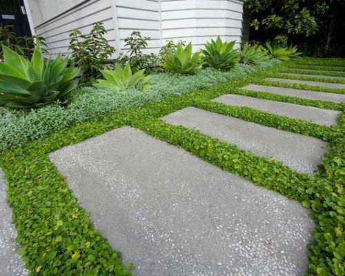 Cycas home design ideas renovations photos for Cycas landscape design