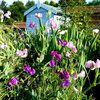 Ask a Garden Designer: What Should I Plant to Grow a Scented Garden?
