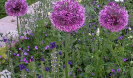 How to Grow Your Own Cut Flower Garden