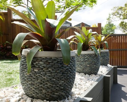 photo of a mid sized tropical front yard garden in brisbane