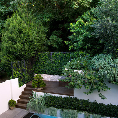 Photo of a contemporary backyard landscaping in Sydney.