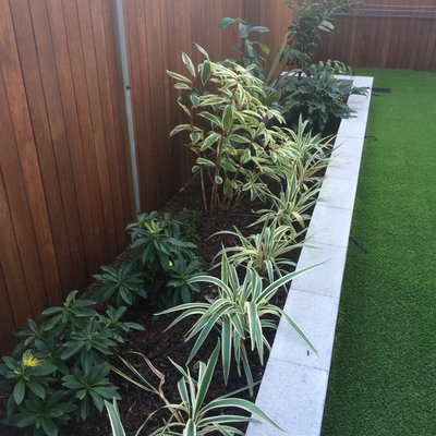 This is an example of a small contemporary backyard landscaping in Brisbane.