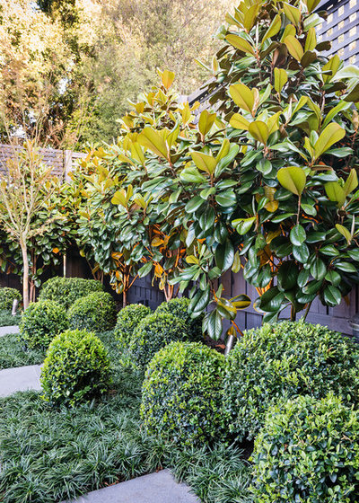 Block Out Thy Neighbour: Privacy Plants for the Modern Home Cf31dcce02dc50ce_0322-w400-h560-b0-p0--contemporary-garden